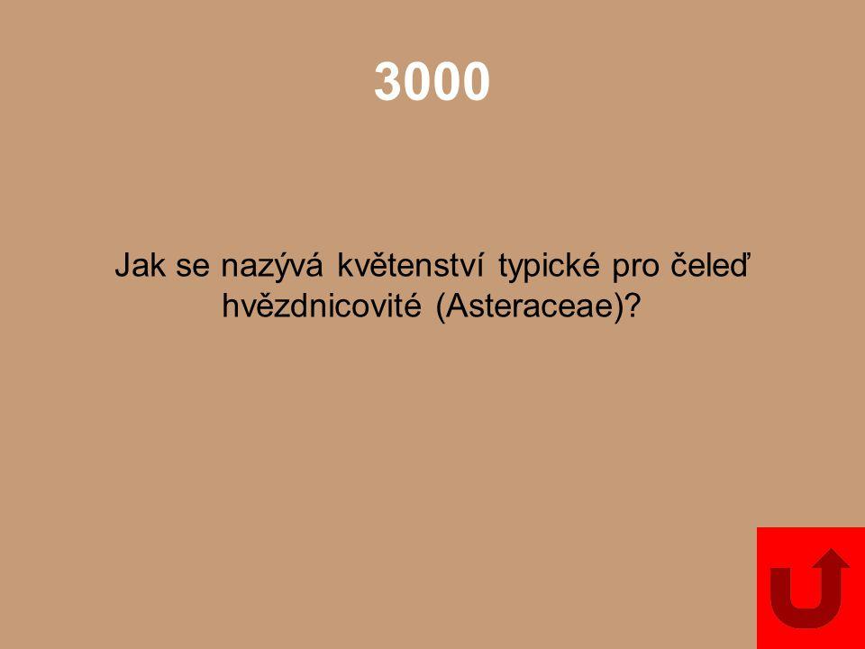 Jak se nazývá květenství typické pro čeleď hvězdnicovité (Asteraceae)