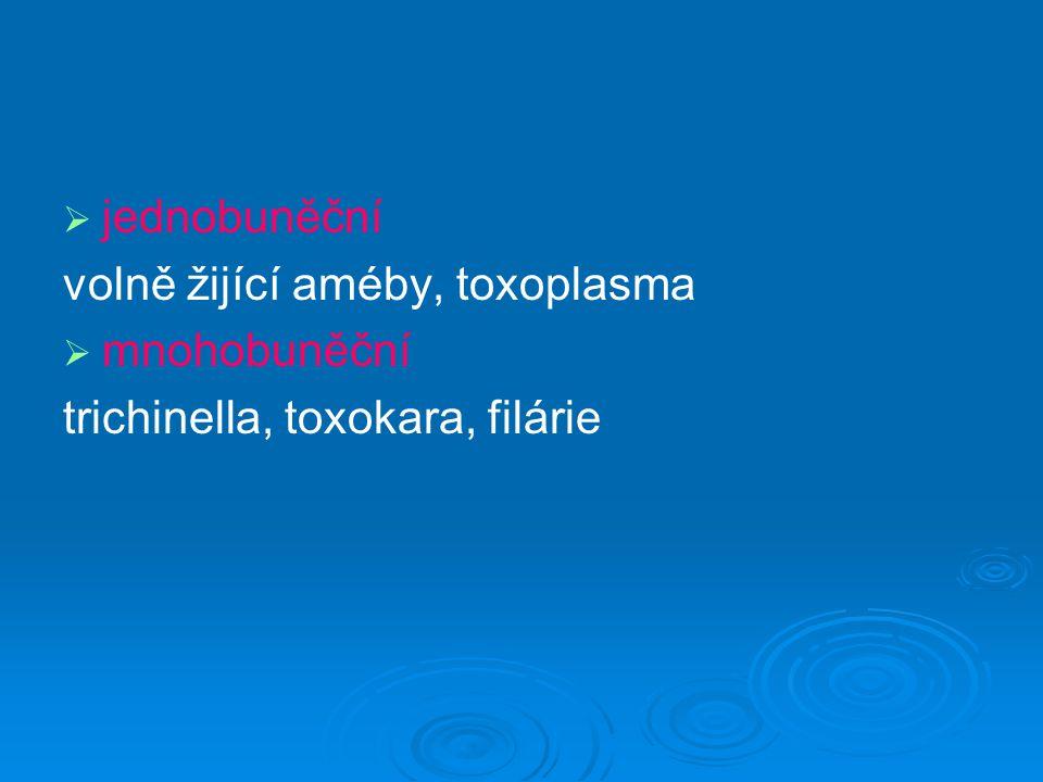 jednobuněční volně žijící améby, toxoplasma mnohobuněční trichinella, toxokara, filárie