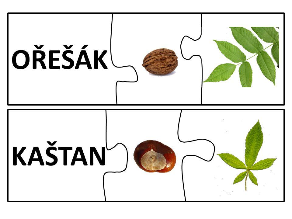 OŘEŠÁK KAŠTAN