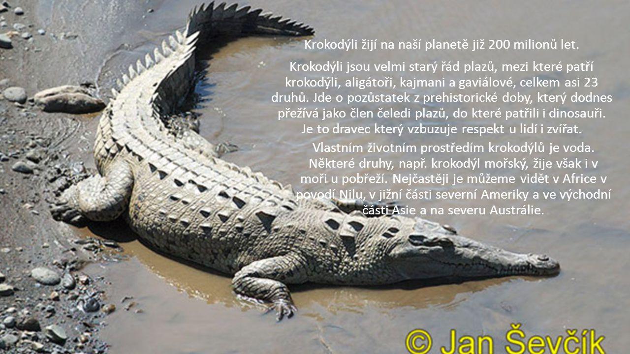 Krokodýli žijí na naší planetě již 200 milionů let