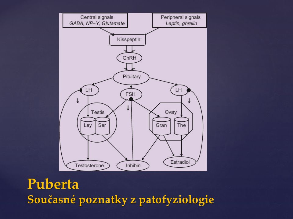 Puberta Současné poznatky z patofyziologie