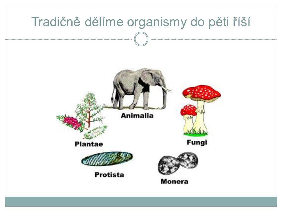 Tradičně dělíme organismy do pěti říší