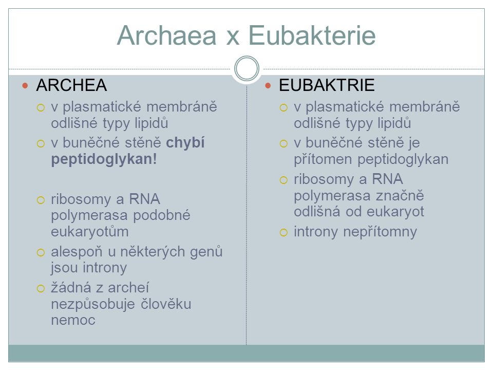 Archaea x Eubakterie ARCHEA EUBAKTRIE