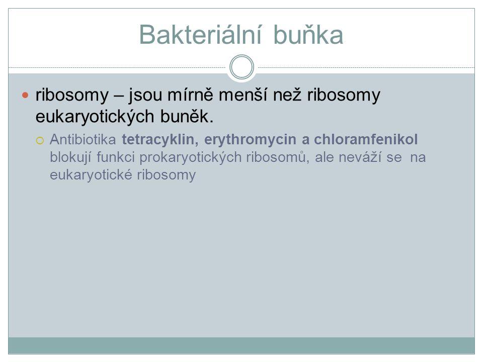 Bakteriální buňka ribosomy – jsou mírně menší než ribosomy eukaryotických buněk.