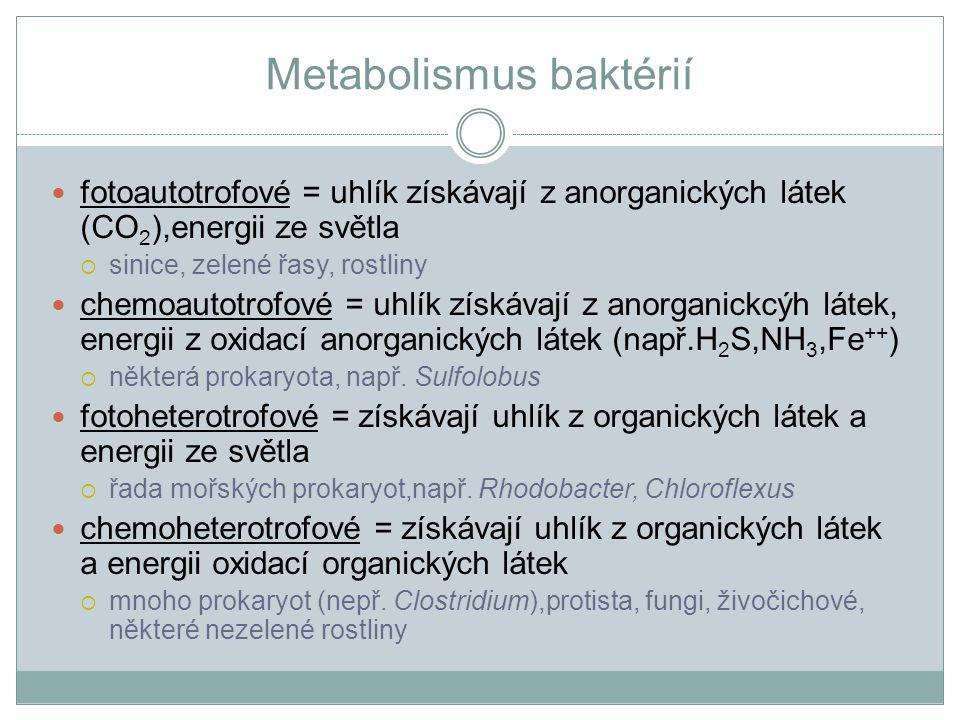 Metabolismus baktérií