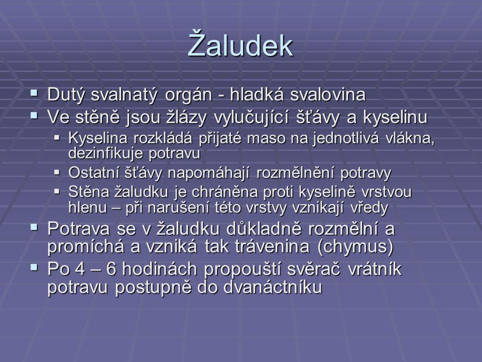 Žaludek Dutý svalnatý orgán - hladká svalovina