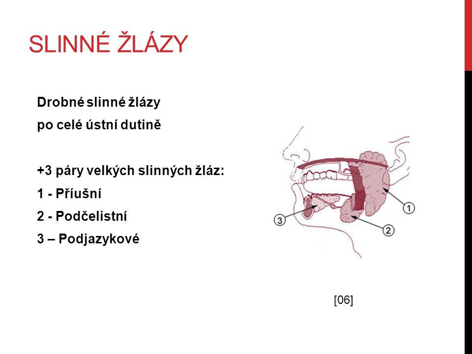 Slinné žlázy Drobné slinné žlázy po celé ústní dutině +3 páry velkých slinných žláz: 1 - Příušní 2 - Podčelistní 3 – Podjazykové