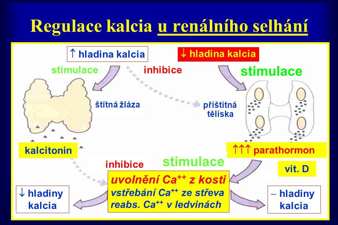 Regulace kalcia u renálního selhání