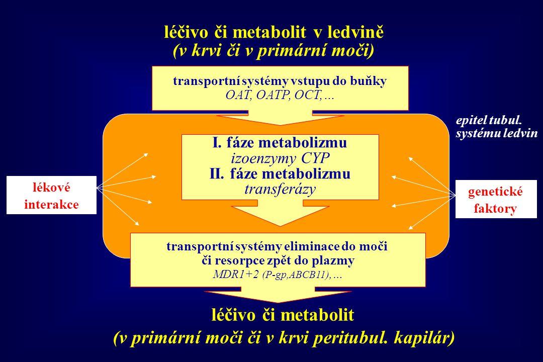léčivo či metabolit v ledvině (v krvi či v primární moči)