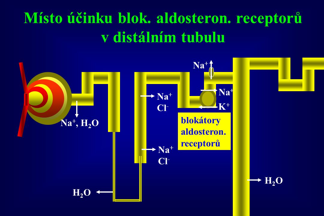 Místo účinku blok. aldosteron. receptorů v distálním tubulu