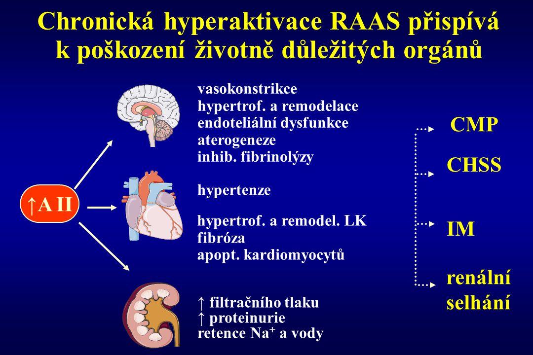 Chronická hyperaktivace RAAS přispívá k poškození životně důležitých orgánů