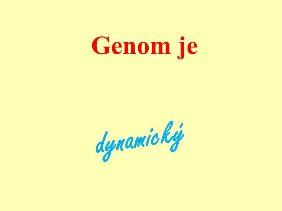 Genom je dynamický