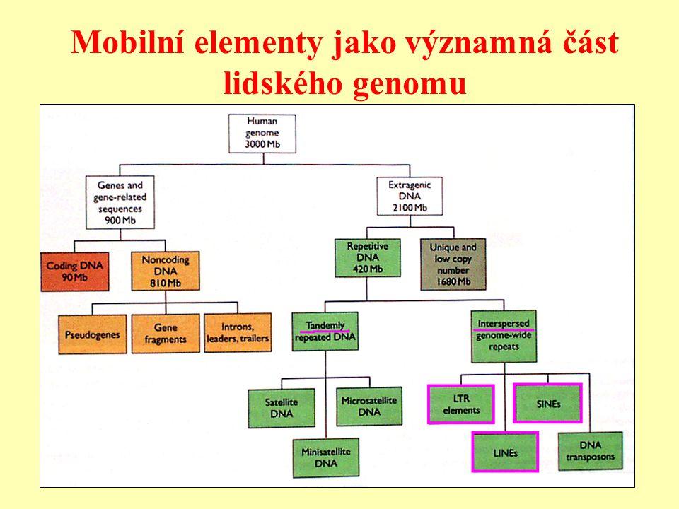 Mobilní elementy jako významná část lidského genomu