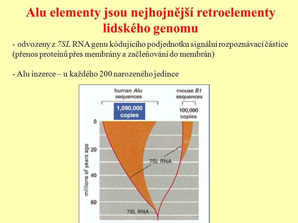 Alu elementy jsou nejhojnější retroelementy lidského genomu