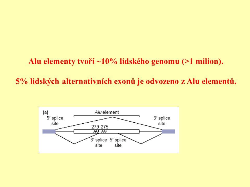 Alu elementy tvoří ~10% lidského genomu (>1 milion).