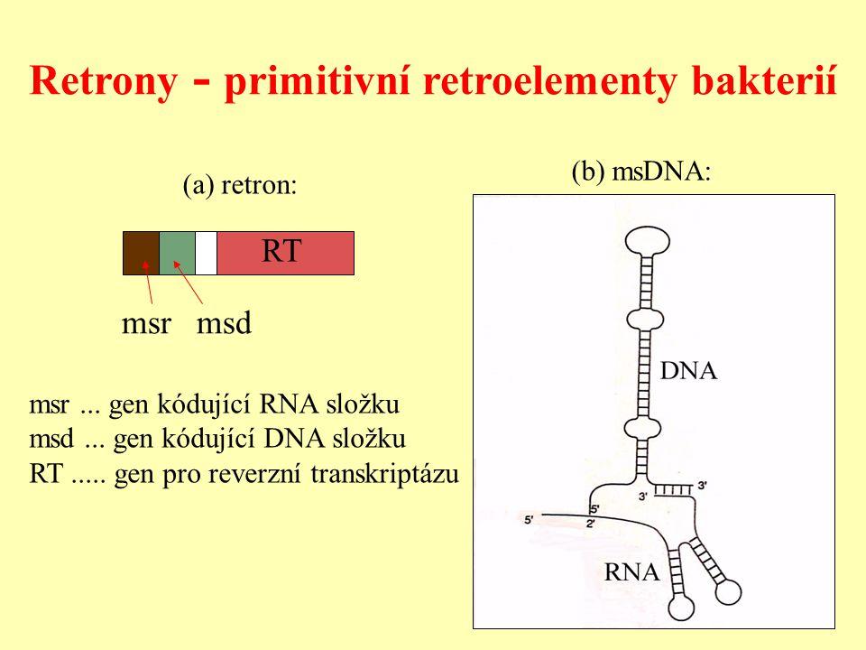 Retrony - primitivní retroelementy bakterií