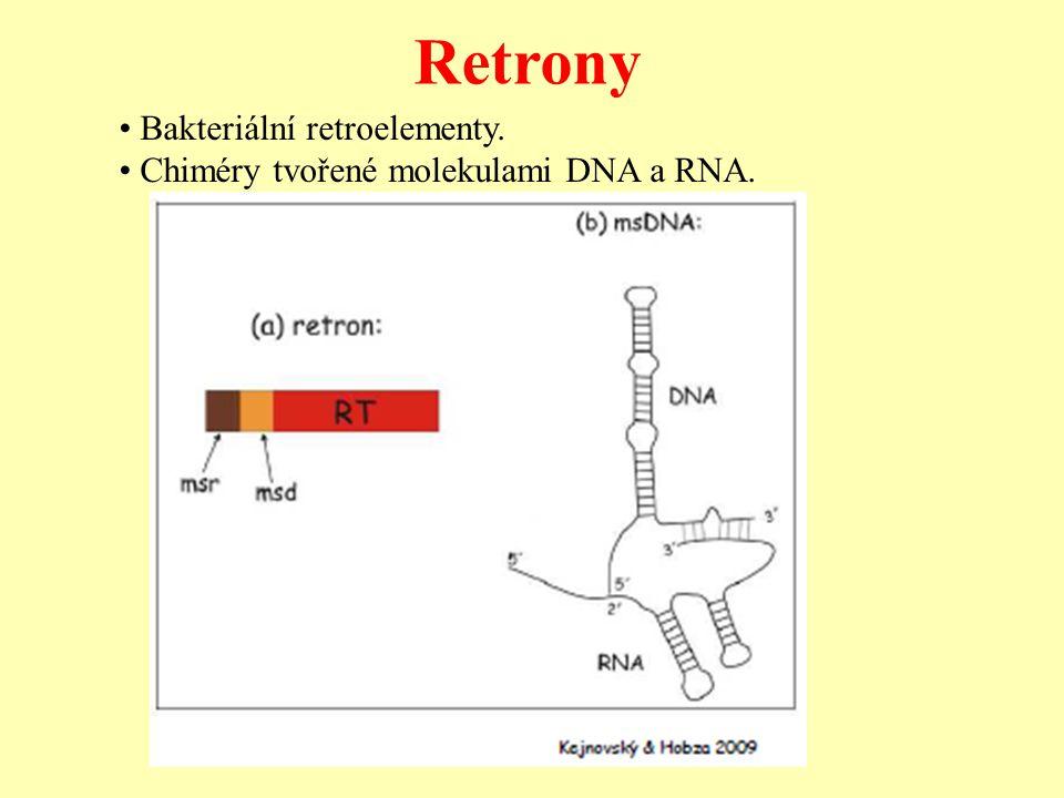 Retrony • Bakteriální retroelementy.
