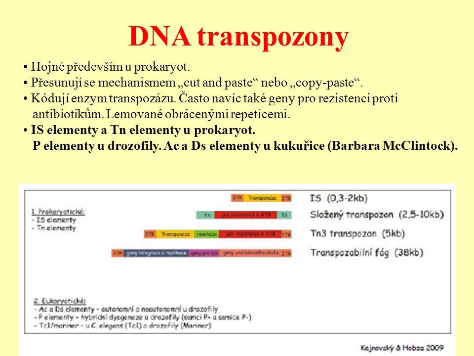 DNA transpozony • Hojné především u prokaryot.