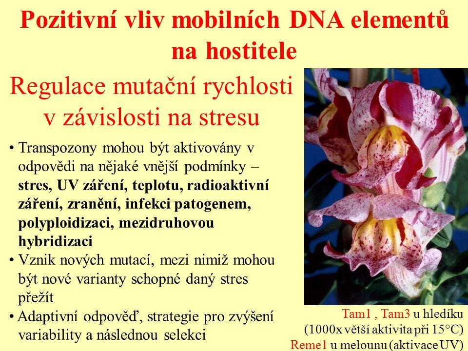 Pozitivní vliv mobilních DNA elementů na hostitele