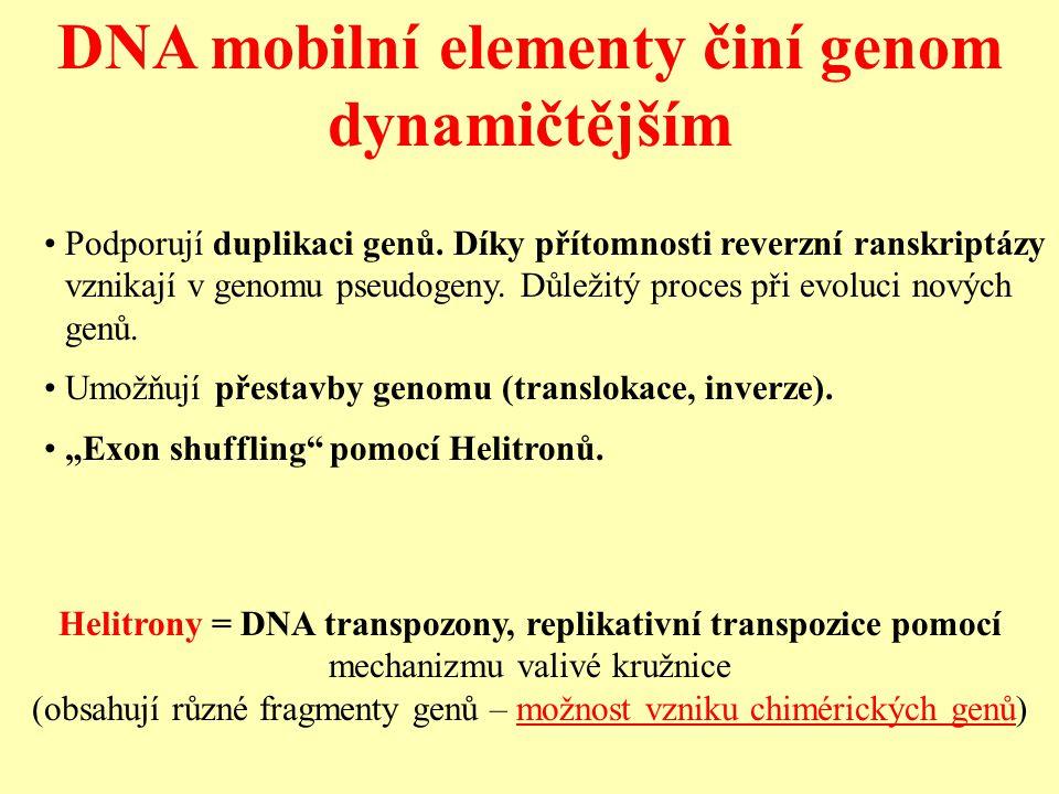 DNA mobilní elementy činí genom dynamičtějším