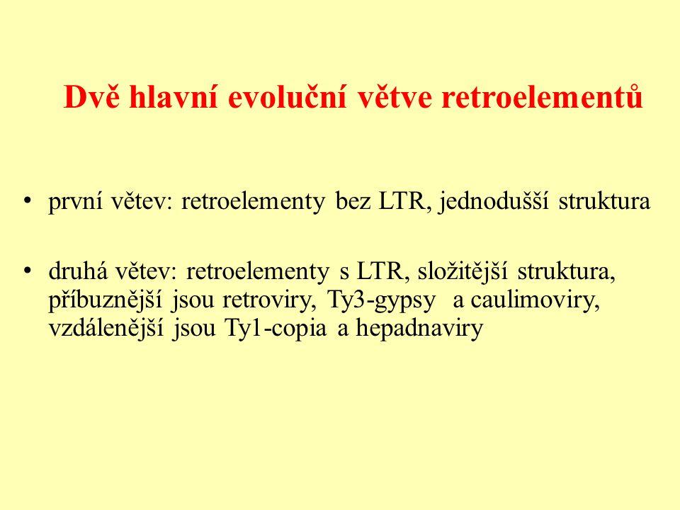 Dvě hlavní evoluční větve retroelementů