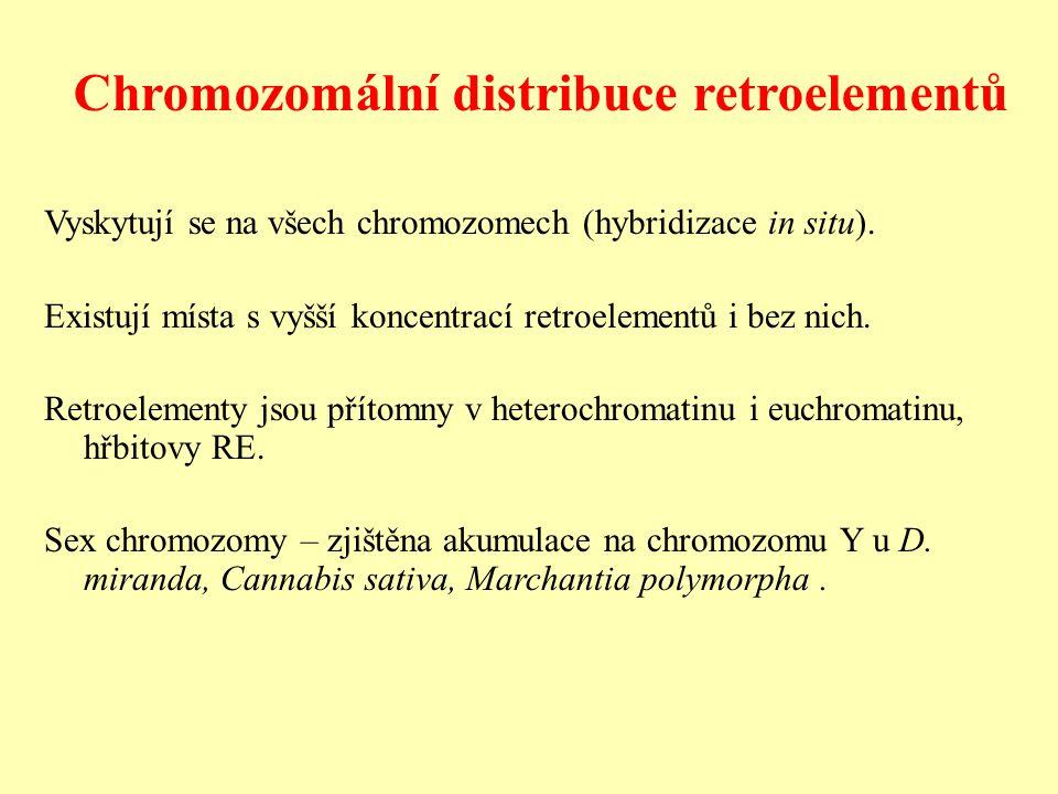 Chromozomální distribuce retroelementů