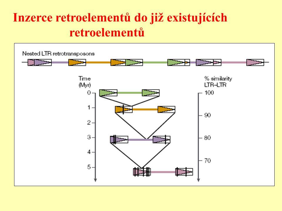 Inzerce retroelementů do již existujících