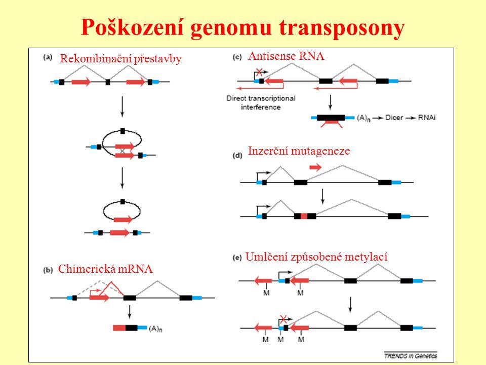 Poškození genomu transposony