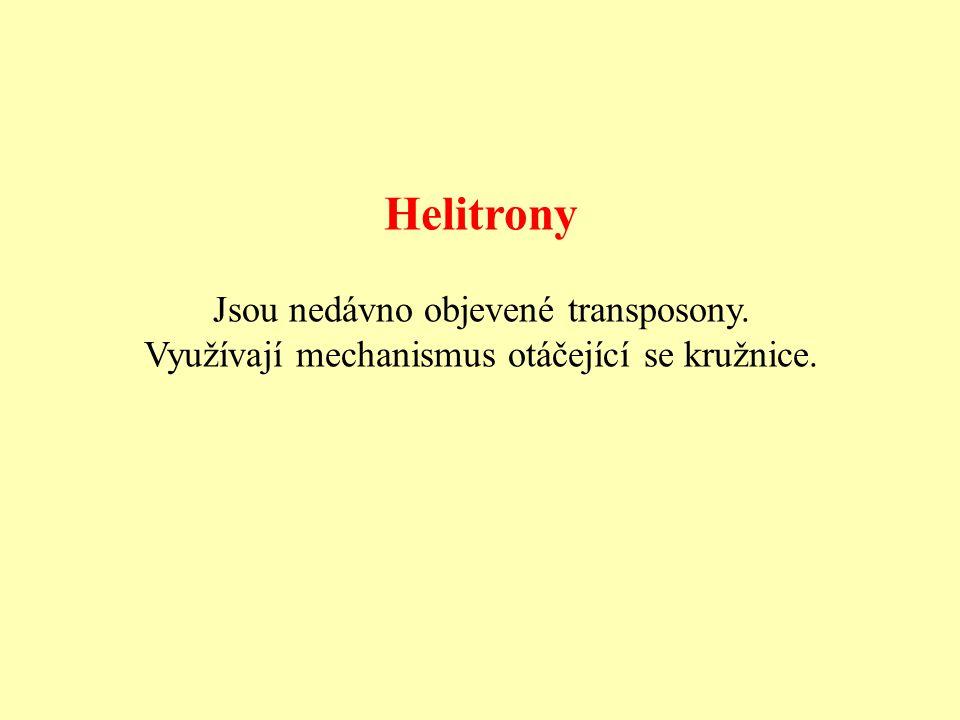 Helitrony Jsou nedávno objevené transposony.