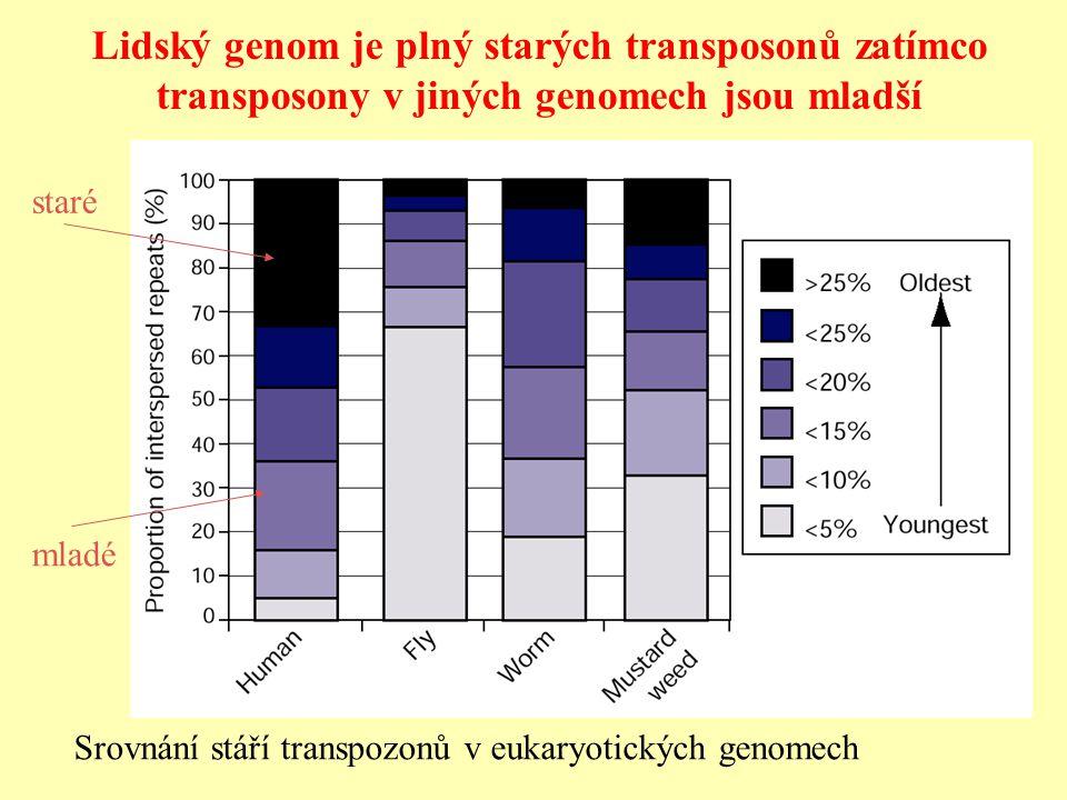 Lidský genom je plný starých transposonů zatímco transposony v jiných genomech jsou mladší