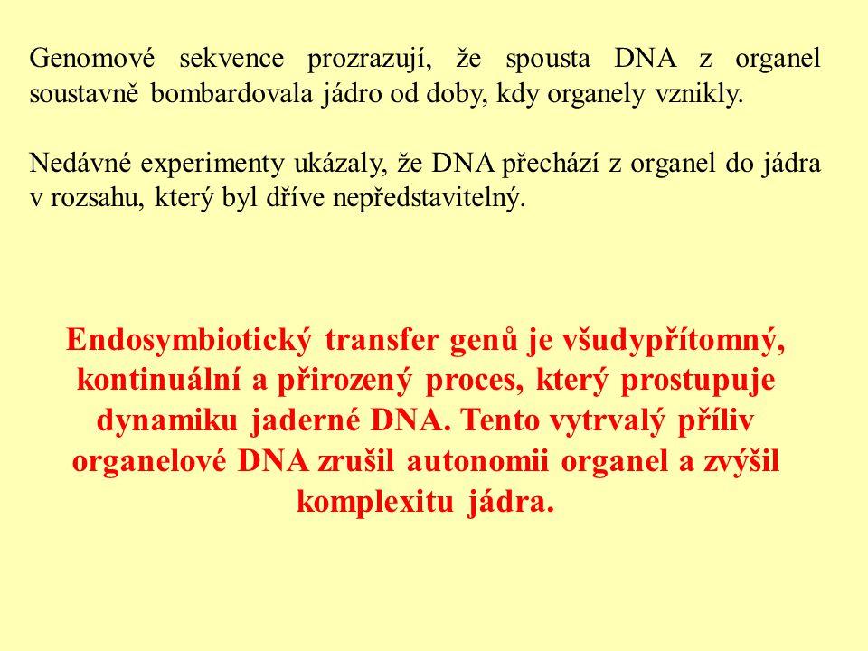 Genomové sekvence prozrazují, že spousta DNA z organel soustavně bombardovala jádro od doby, kdy organely vznikly.