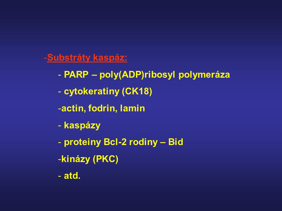 Substráty kaspáz: PARP – poly(ADP)ribosyl polymeráza. cytokeratiny (CK18) actin, fodrin, lamin. kaspázy.