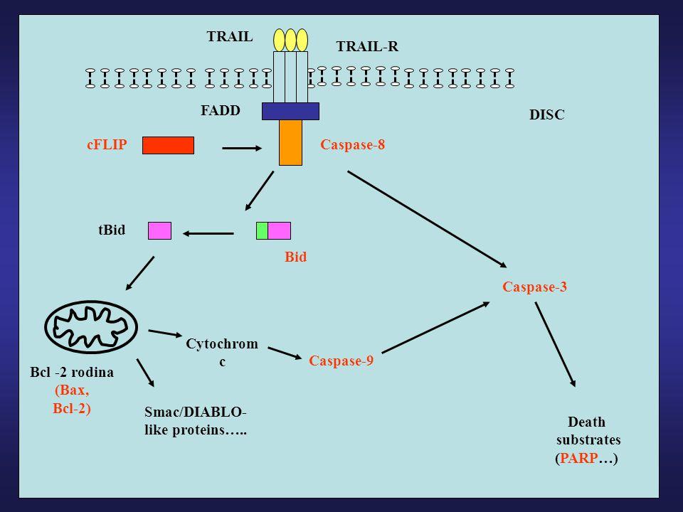 TRAIL TRAIL-R. FADD. DISC. cFLIP. Caspase-8. tBid. Bid. Caspase-3. Cytochrom c. Caspase-9.