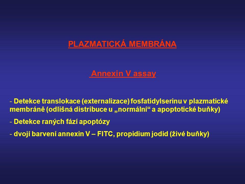 PLAZMATICKÁ MEMBRÁNA Annexin V assay