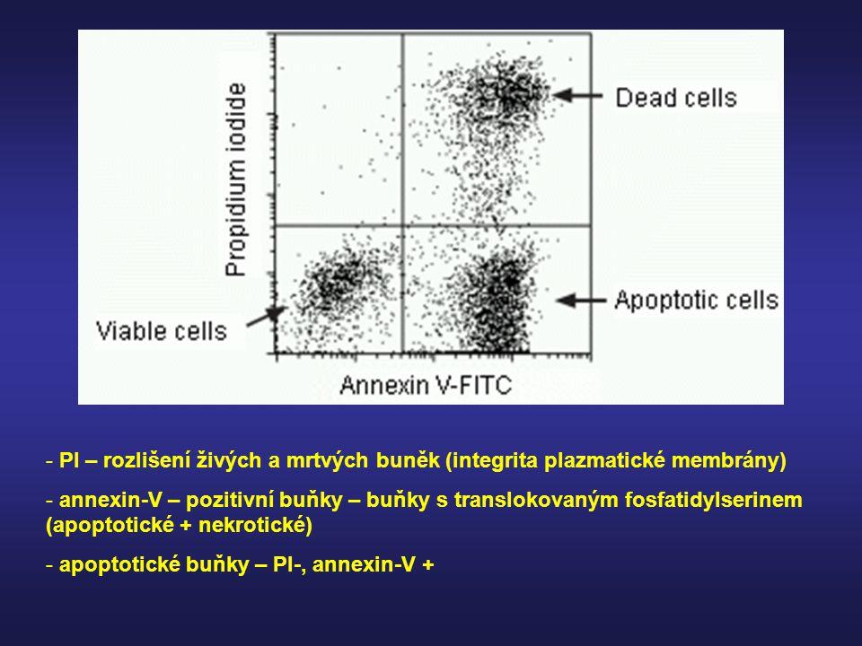 PI – rozlišení živých a mrtvých buněk (integrita plazmatické membrány)