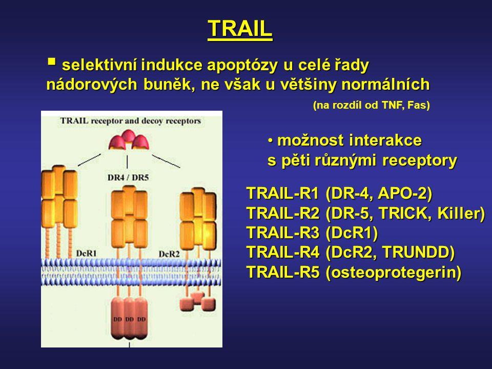 TRAIL selektivní indukce apoptózy u celé řady nádorových buněk, ne však u většiny normálních. (na rozdíl od TNF, Fas)