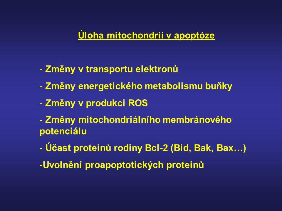Úloha mitochondrií v apoptóze