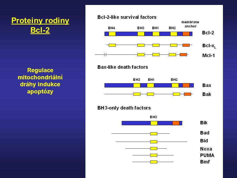 Regulace mitochondriální dráhy indukce apoptózy