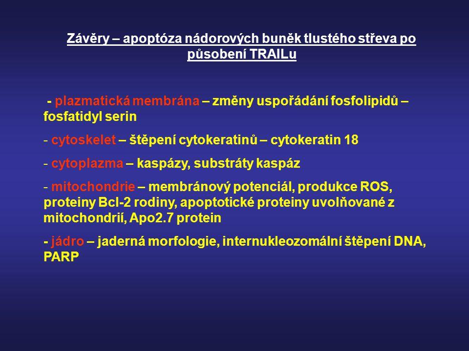 Závěry – apoptóza nádorových buněk tlustého střeva po působení TRAILu