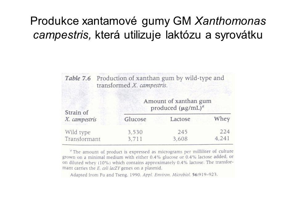 Produkce xantamové gumy GM Xanthomonas campestris, která utilizuje laktózu a syrovátku