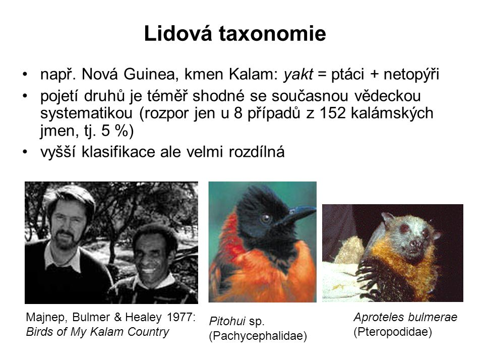 Lidová taxonomie např. Nová Guinea, kmen Kalam: yakt = ptáci + netopýři.