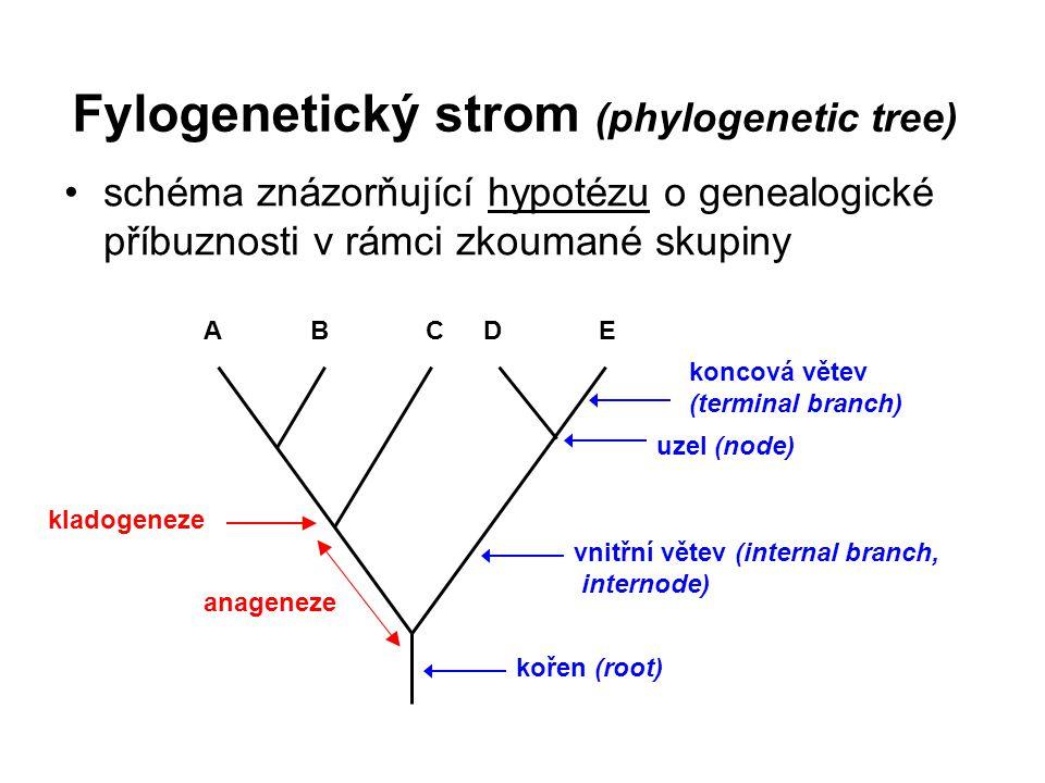 Fylogenetický strom (phylogenetic tree)
