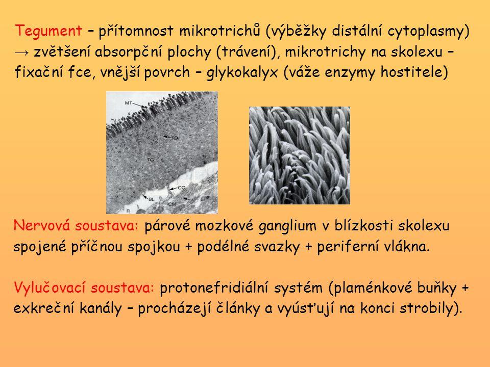 Tegument – přítomnost mikrotrichů (výběžky distální cytoplasmy) → zvětšení absorpční plochy (trávení), mikrotrichy na skolexu – fixační fce, vnější povrch – glykokalyx (váže enzymy hostitele)
