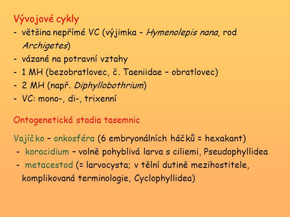 Vývojové cykly většina nepřímé VC (výjimka - Hymenolepis nana, rod Archigetes) vázané na potravní vztahy.