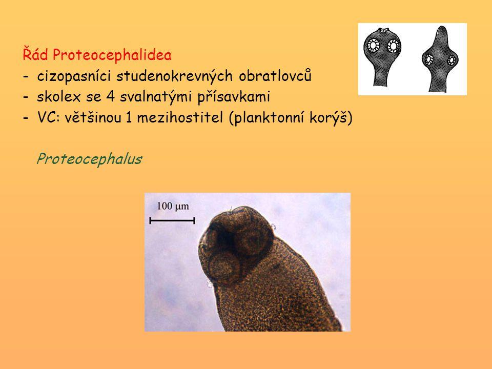 Řád Proteocephalidea cizopasníci studenokrevných obratlovců. skolex se 4 svalnatými přísavkami. VC: většinou 1 mezihostitel (planktonní korýš)