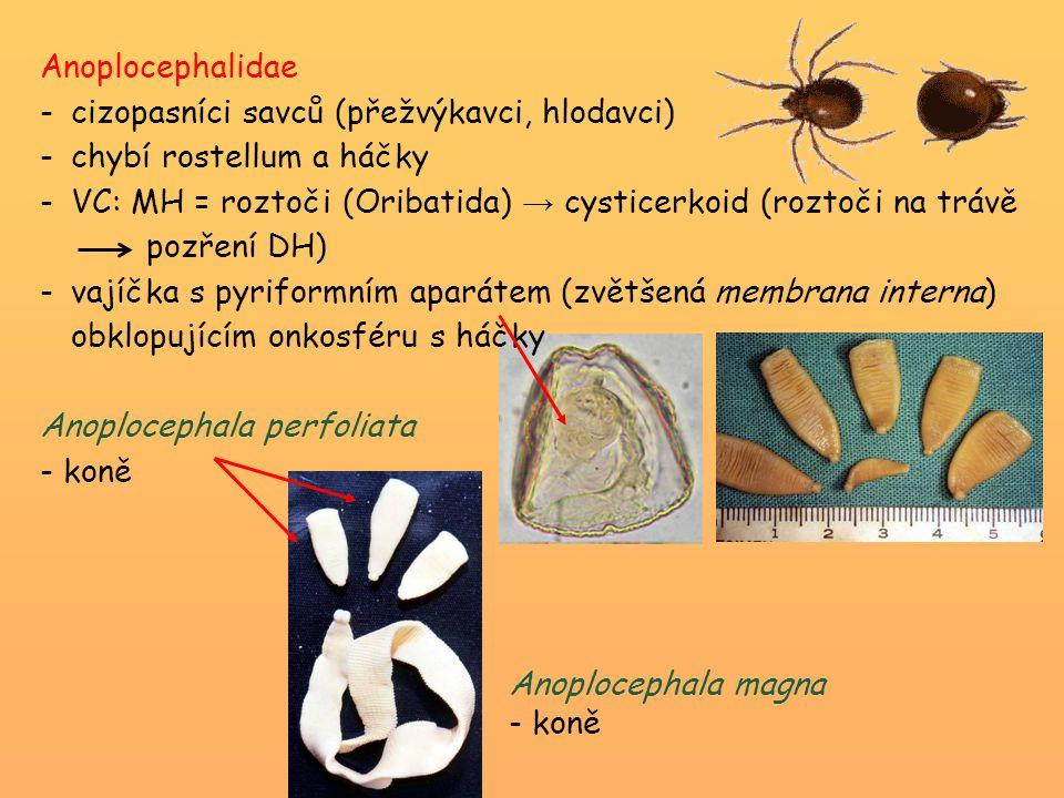 Anoplocephalidae cizopasníci savců (přežvýkavci, hlodavci) chybí rostellum a háčky.