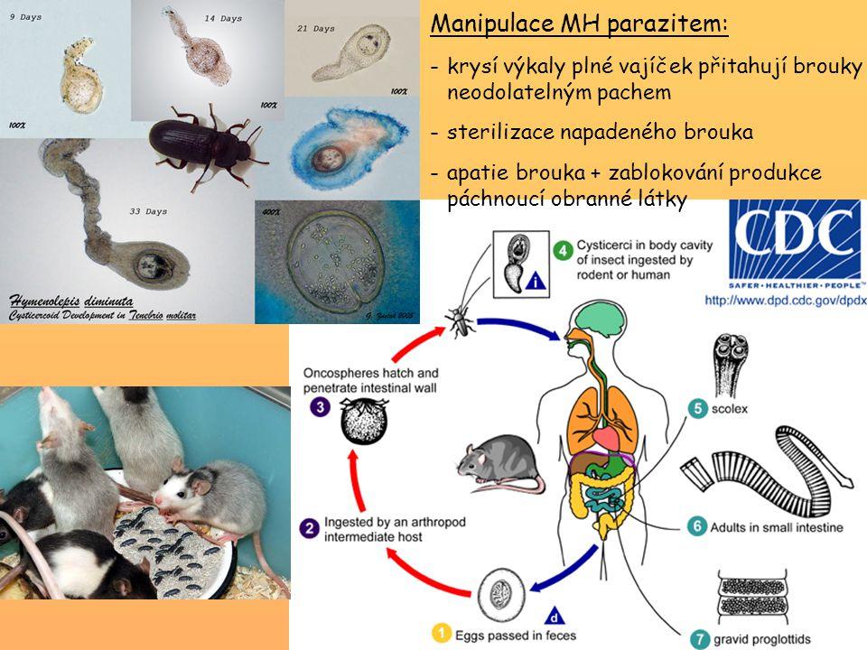Manipulace MH parazitem: