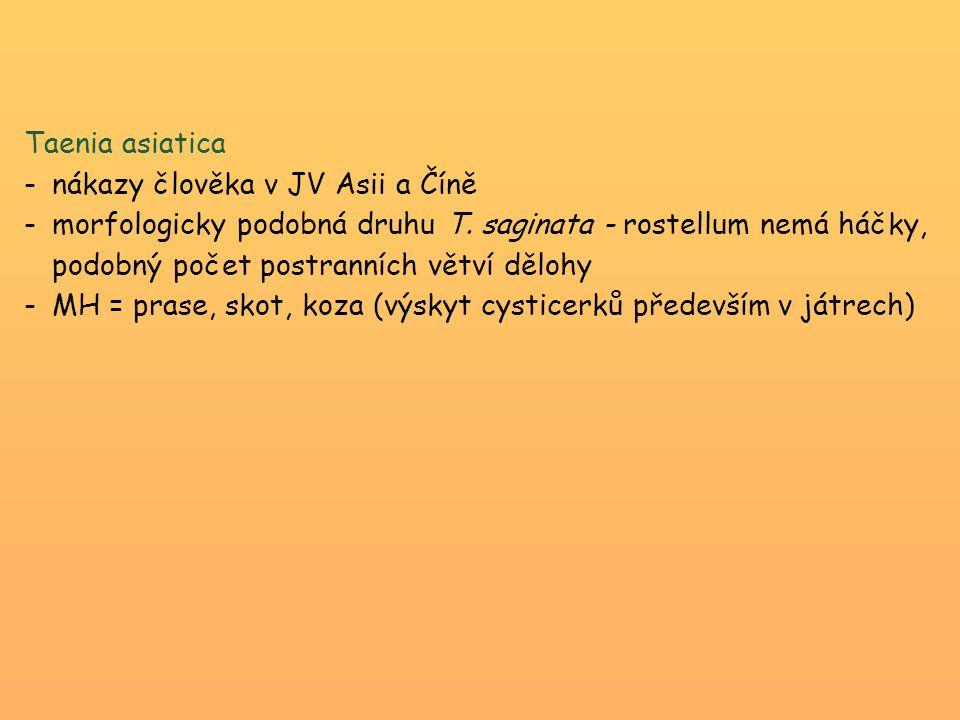 Taenia asiatica nákazy člověka v JV Asii a Číně.