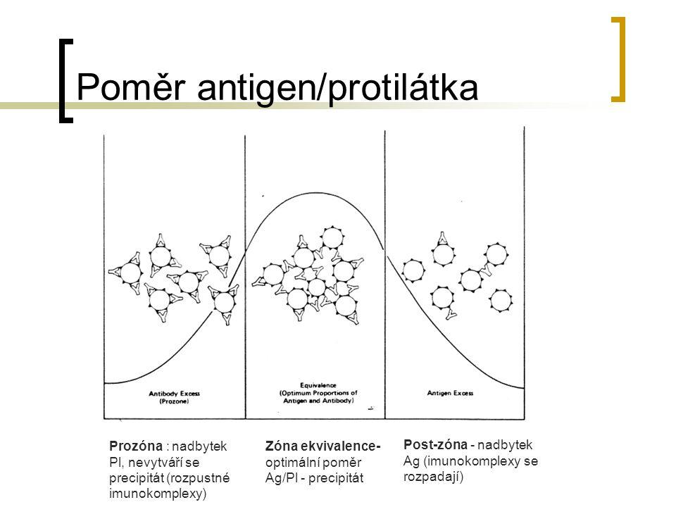 Poměr antigen/protilátka
