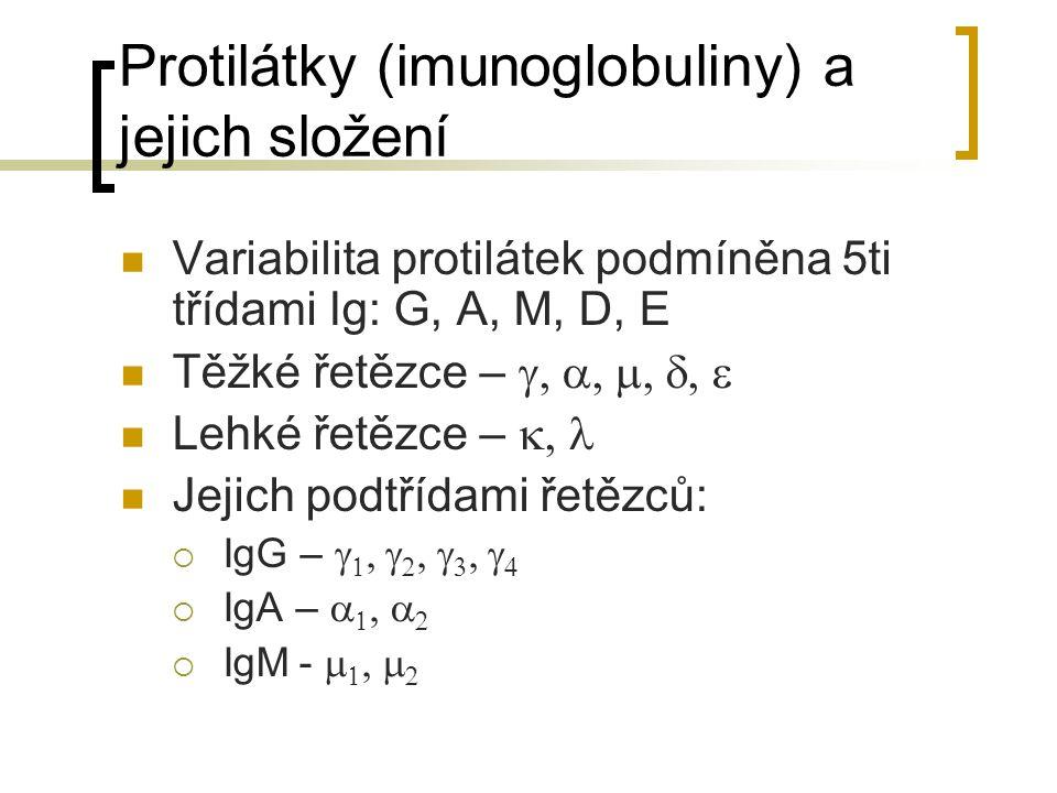 Protilátky (imunoglobuliny) a jejich složení